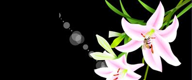 蜜蜂百合花flash透明素材2