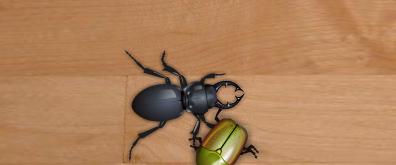 地板上爬行的昆虫flash素材
