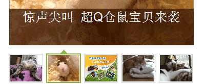 雅虎宠物首页幻灯片设计制作