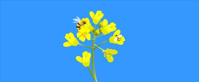 蜜蜂飞舞采蜜flash透明素材