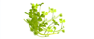 绿色树叶摇摆flash素材