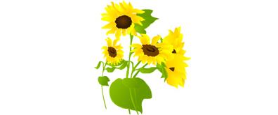 随风摇摆的向日葵flash矢量透明素材