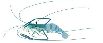 鲜活的虾子flash透明素材