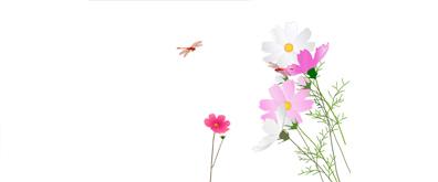 菊花蜻蜓flash透明素材