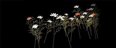 枯黄的菊花flash透明素材
