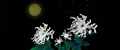 蜜蜂,菊花,嫦娥flash透明素材