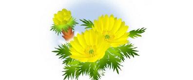 黄色的菊花flash透明素材