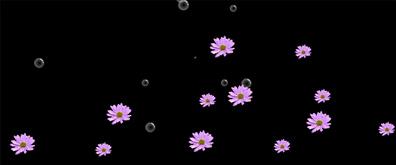 飞舞飘落的菊花瓣flash透明素材