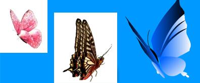 侧面效果的蝴蝶flash透明素材
