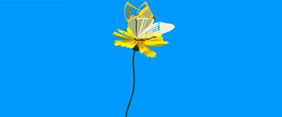 花朵上的蝴蝶flash透明素材