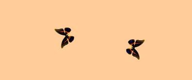 两只蝴蝶flash素材