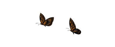 两只蝴蝶flash素材2