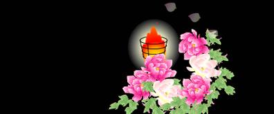 牡丹花瓣飘落的flash透明素材