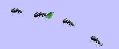 蚂蚁搬家flash透明素材