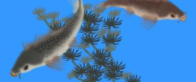 水中嬉戏的鲤鱼flash素材