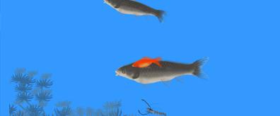 游动的鱼虾flash透明素材