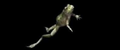 跳跃行走的青蛙flash素材