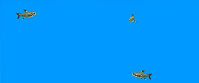 游动的小金鱼flash素材