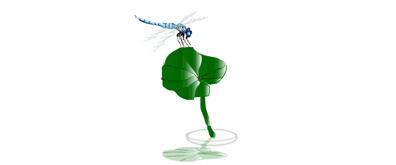 静止在荷叶上的蜻蜓flash素材