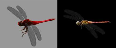 两只静止的蜻蜓flash素材