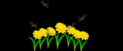 鲜花,蜻蜓flash透明素材