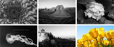 jquery实现图像黑白与彩色相互切换